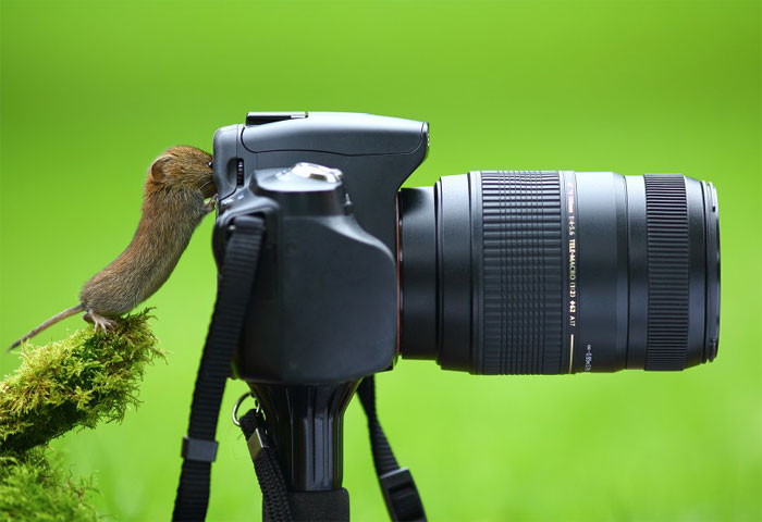 Animals-Getting-Cozy-with-Camera-Gear16