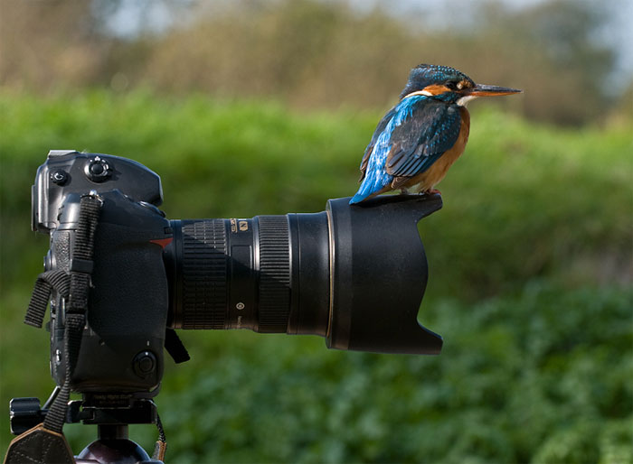 Animals-Getting-Cozy-with-Camera-Gear17