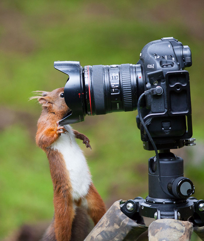 Animals-Getting-Cozy-with-Camera-Gear18