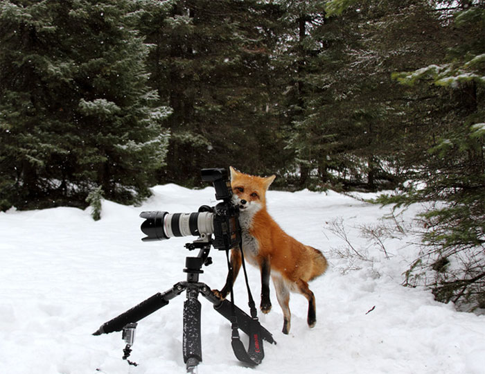 Animals-Getting-Cozy-with-Camera-Gear4