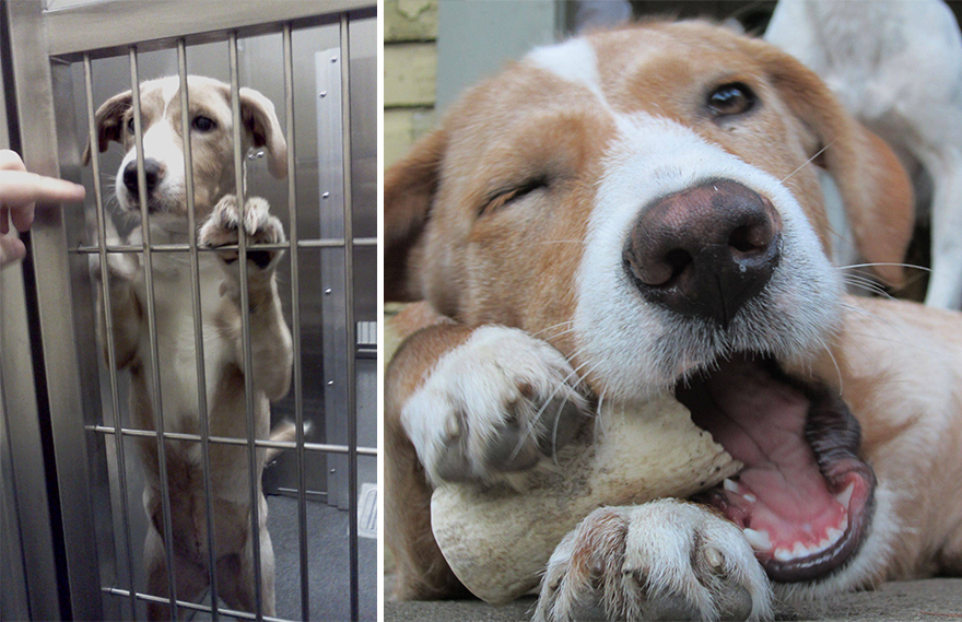 pet-adoption-before-and-after-10__880
