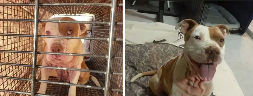pet-adoption-before-and-after-13__880
