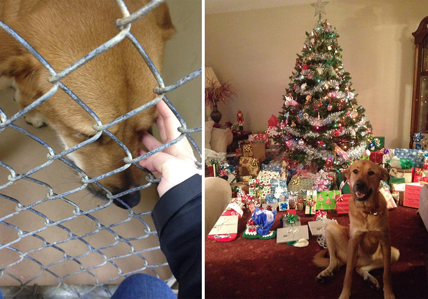 pet-adoption-before-and-after-6__880