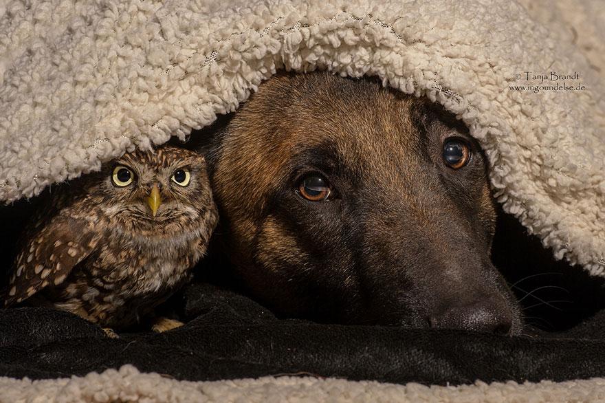 ingo-else-dog-owl-friendship-tanja-brandt-10