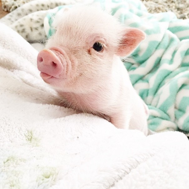 little-girl-piglet-friendship-libby-and-pearl-14-605x605