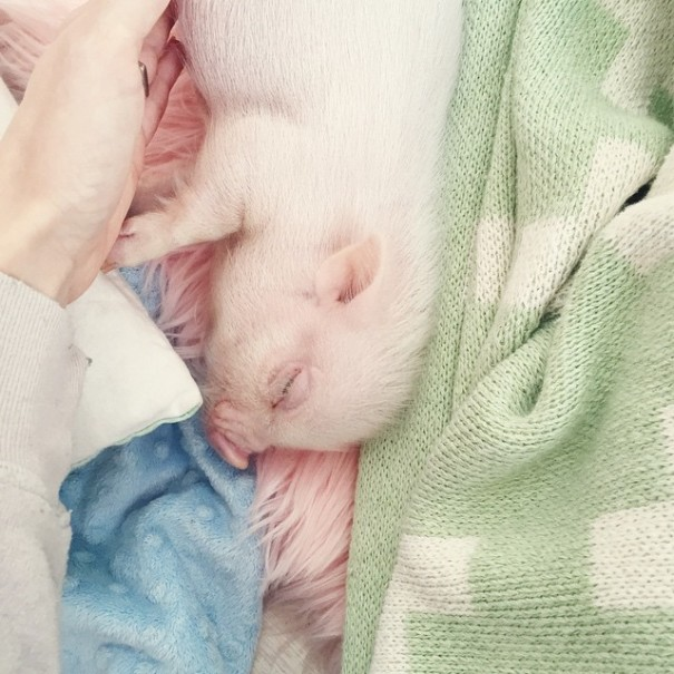 little-girl-piglet-friendship-libby-and-pearl-6-605x605
