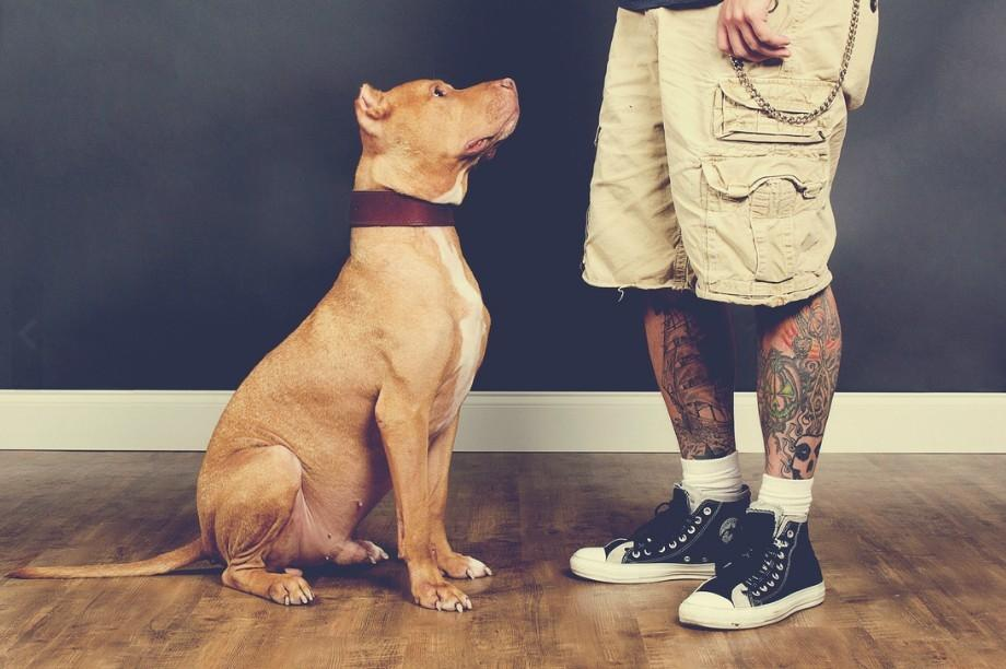 tattoosandrescues613