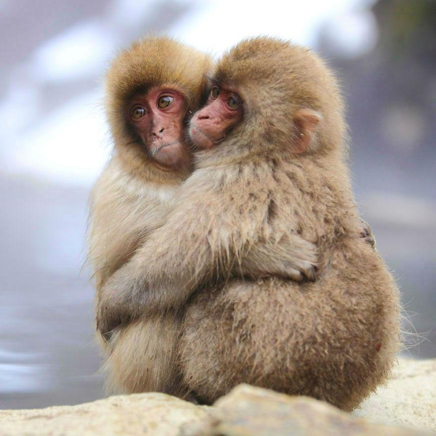 animal-couple100