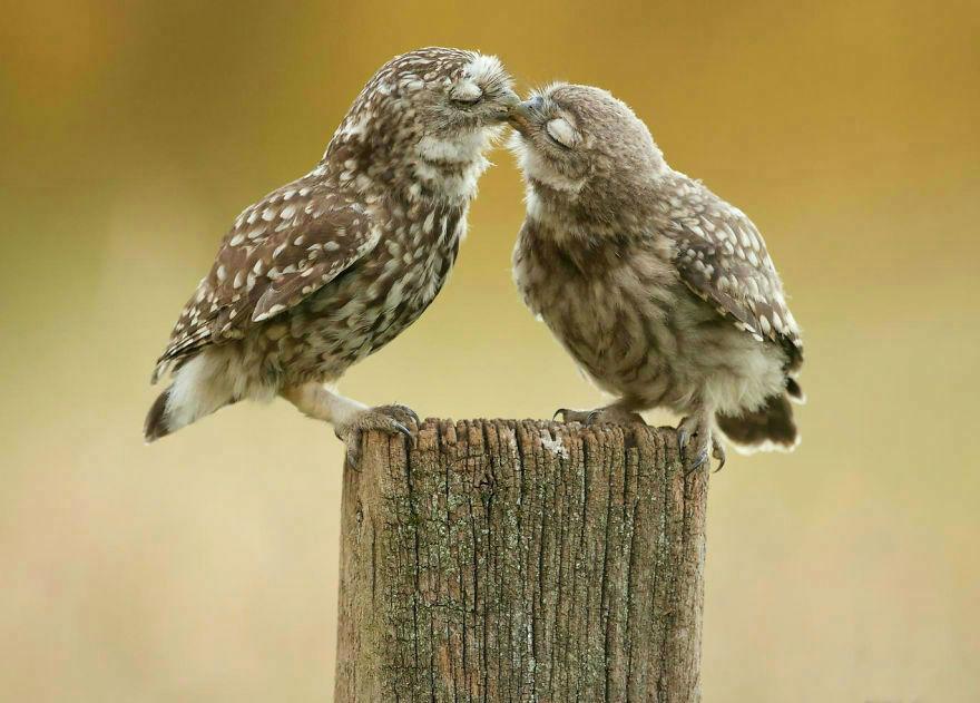 animal-couple121