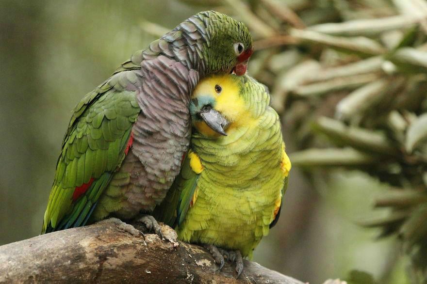 animal-couple135