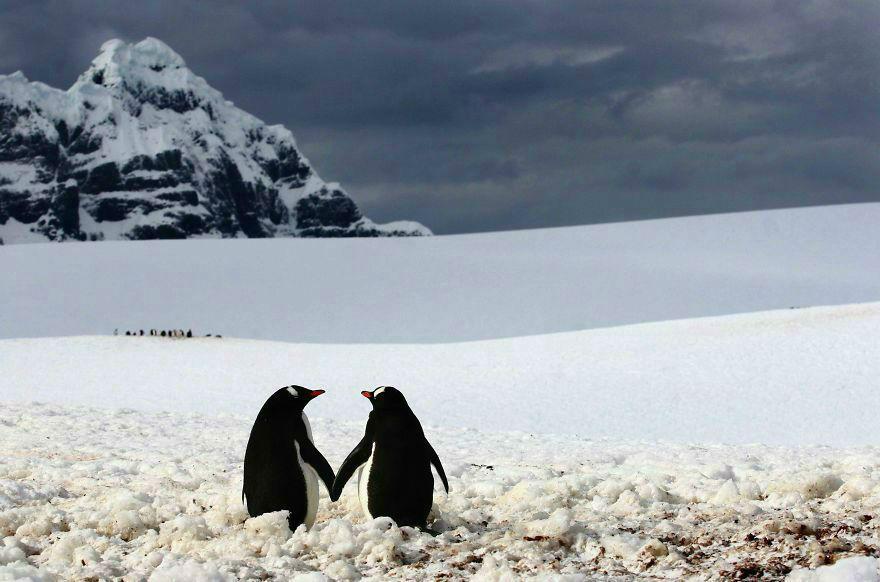 animal-couple23