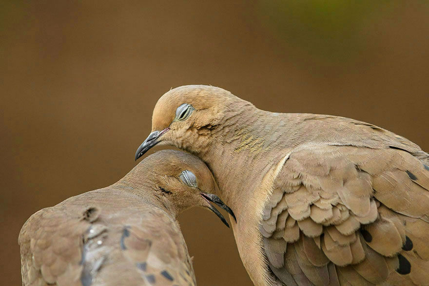animal-couple44