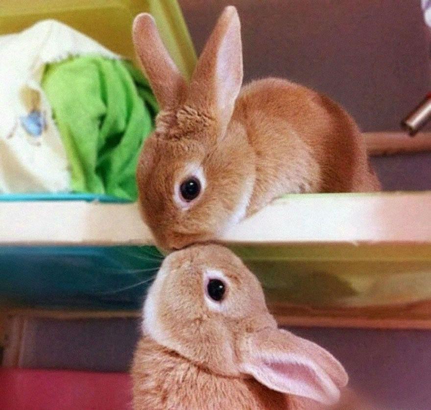 animal-couple65