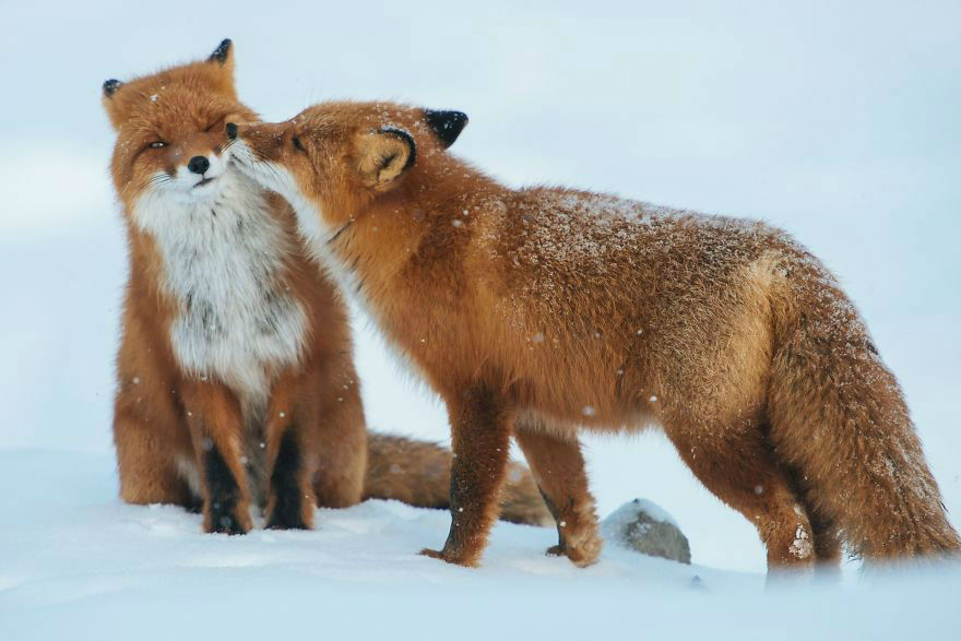 animal-couple79
