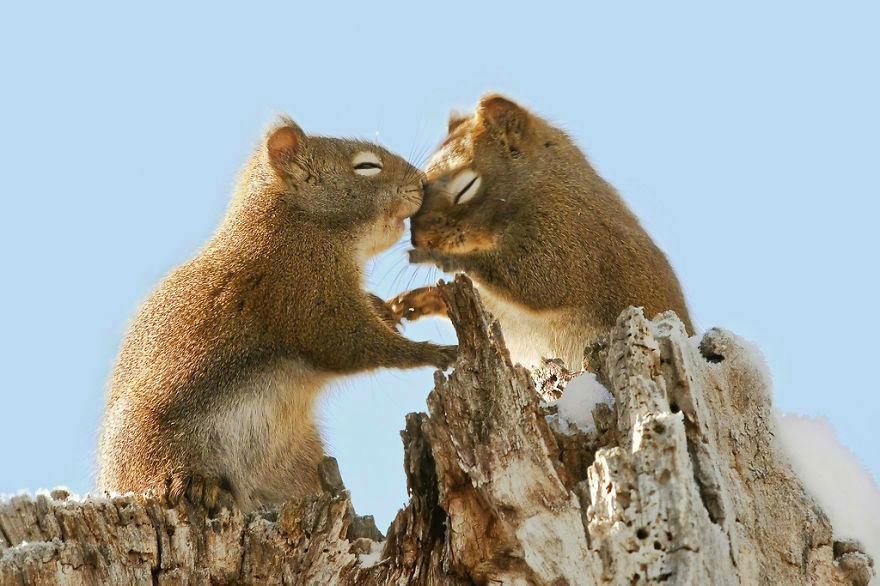 animal-couple93