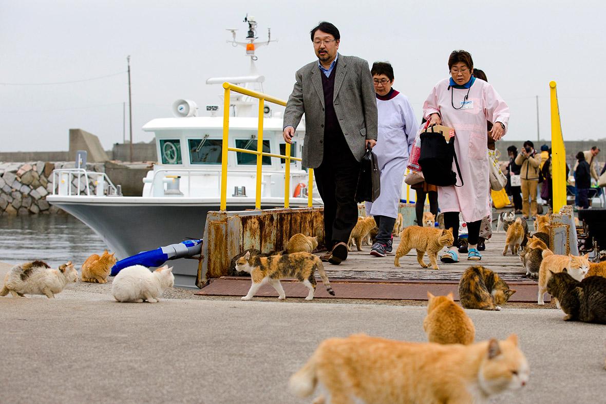 aoshima-cat-island-japan (4)