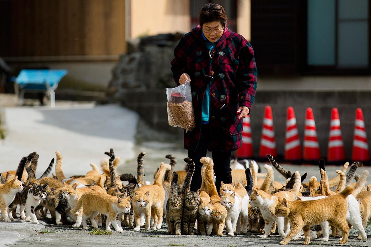 aoshima-cat-island-japan (7)