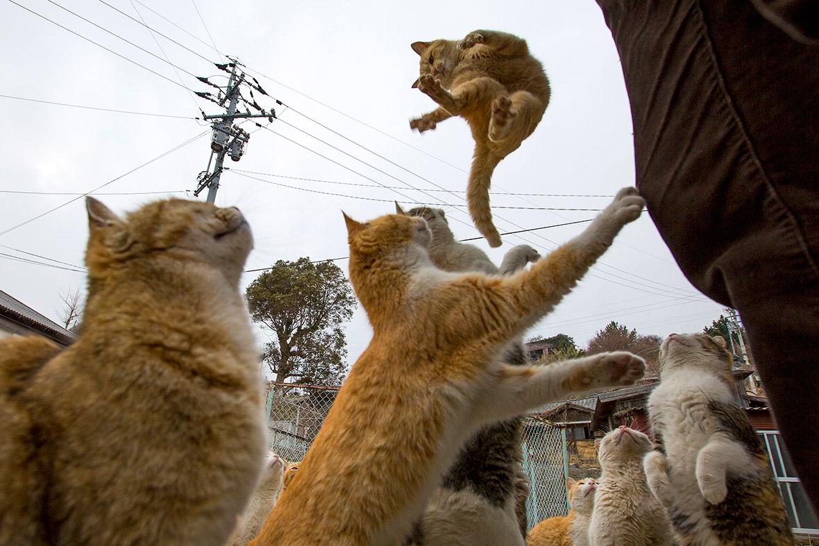 aoshima-cat-island-japan (8)