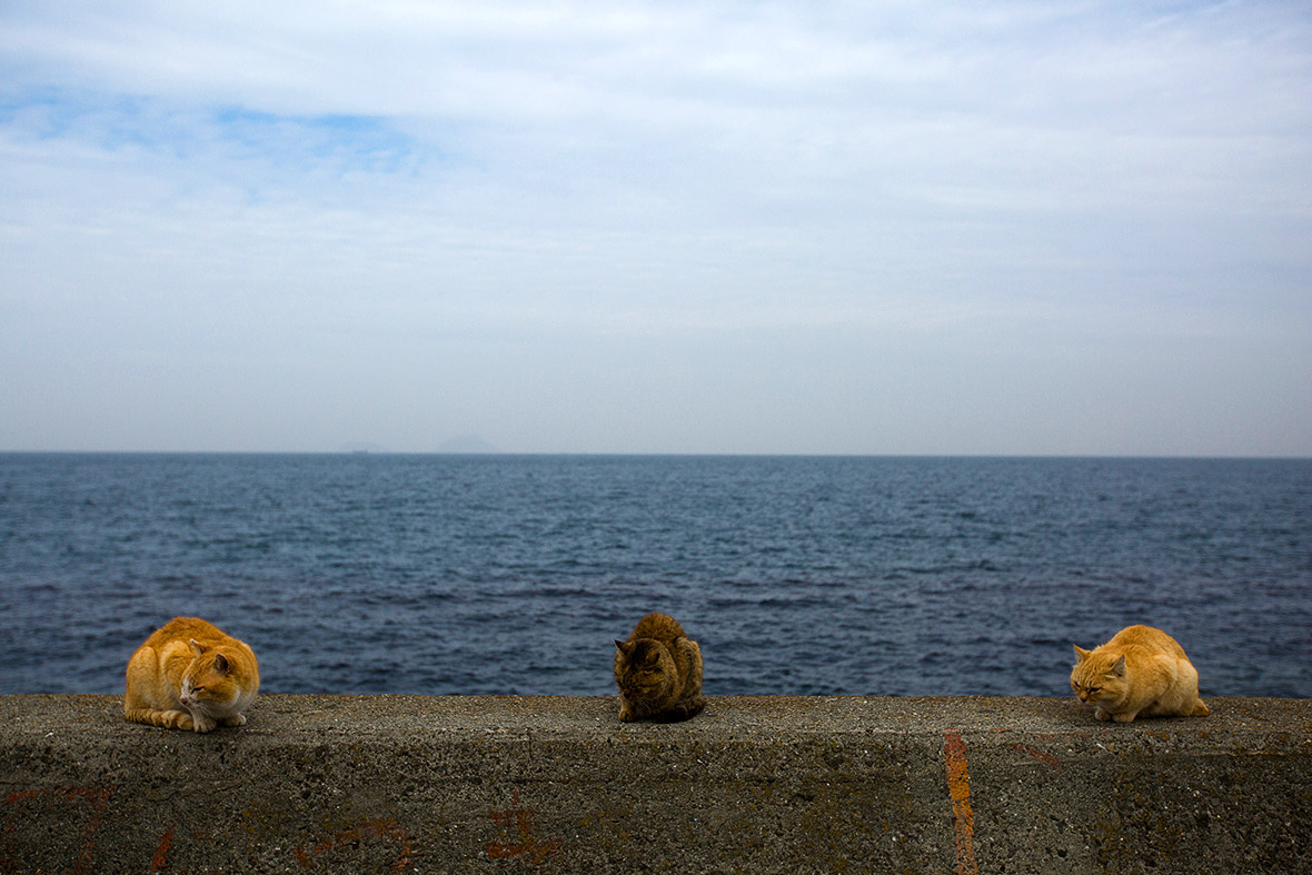 aoshima-cat-island-japan (9)
