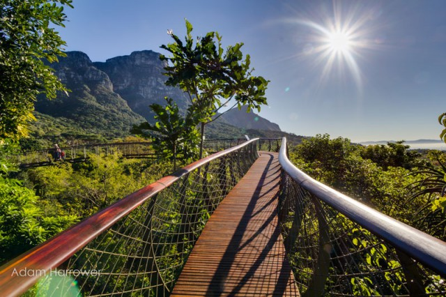 kirstenbosch-tree-canopy-walkway-cape-town-south-africa-10-640x426