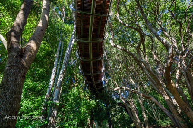 kirstenbosch-tree-canopy-walkway-cape-town-south-africa-11-640x426