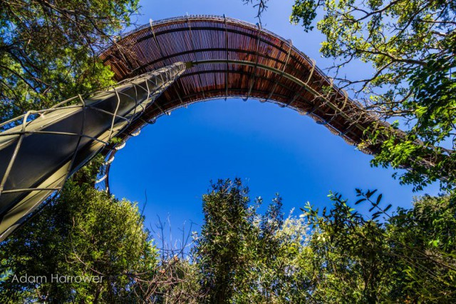 kirstenbosch-tree-canopy-walkway-cape-town-south-africa-12-640x426