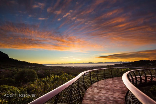 kirstenbosch-tree-canopy-walkway-cape-town-south-africa-13-640x426