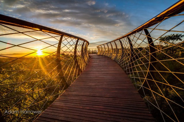 kirstenbosch-tree-canopy-walkway-cape-town-south-africa-15-640x426