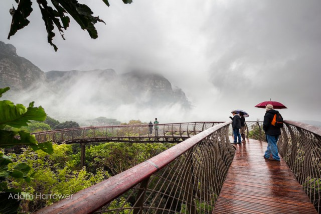 kirstenbosch-tree-canopy-walkway-cape-town-south-africa-3-640x426