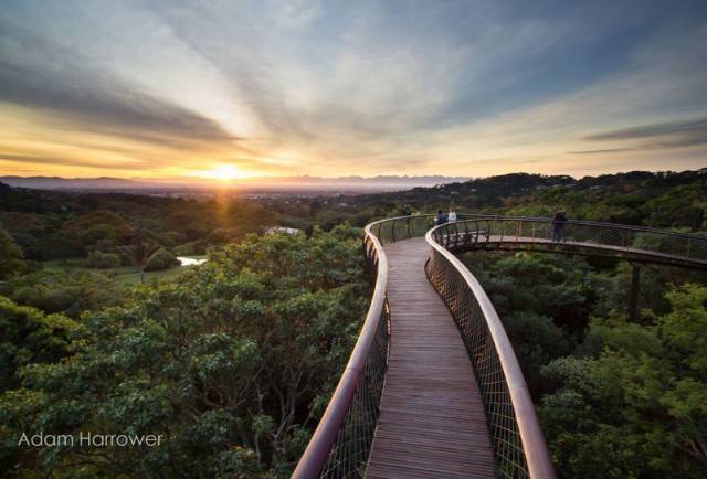 kirstenbosch-tree-canopy-walkway-cape-town-south-africa-4-640x434