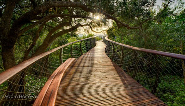 kirstenbosch-tree-canopy-walkway-cape-town-south-africa-6-640x366