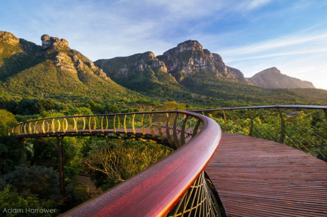 kirstenbosch-tree-canopy-walkway-cape-town-south-africa-8-640x426