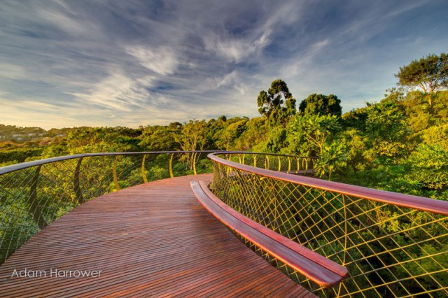 kirstenbosch-tree-canopy-walkway-cape-town-south-africa-9-640x426