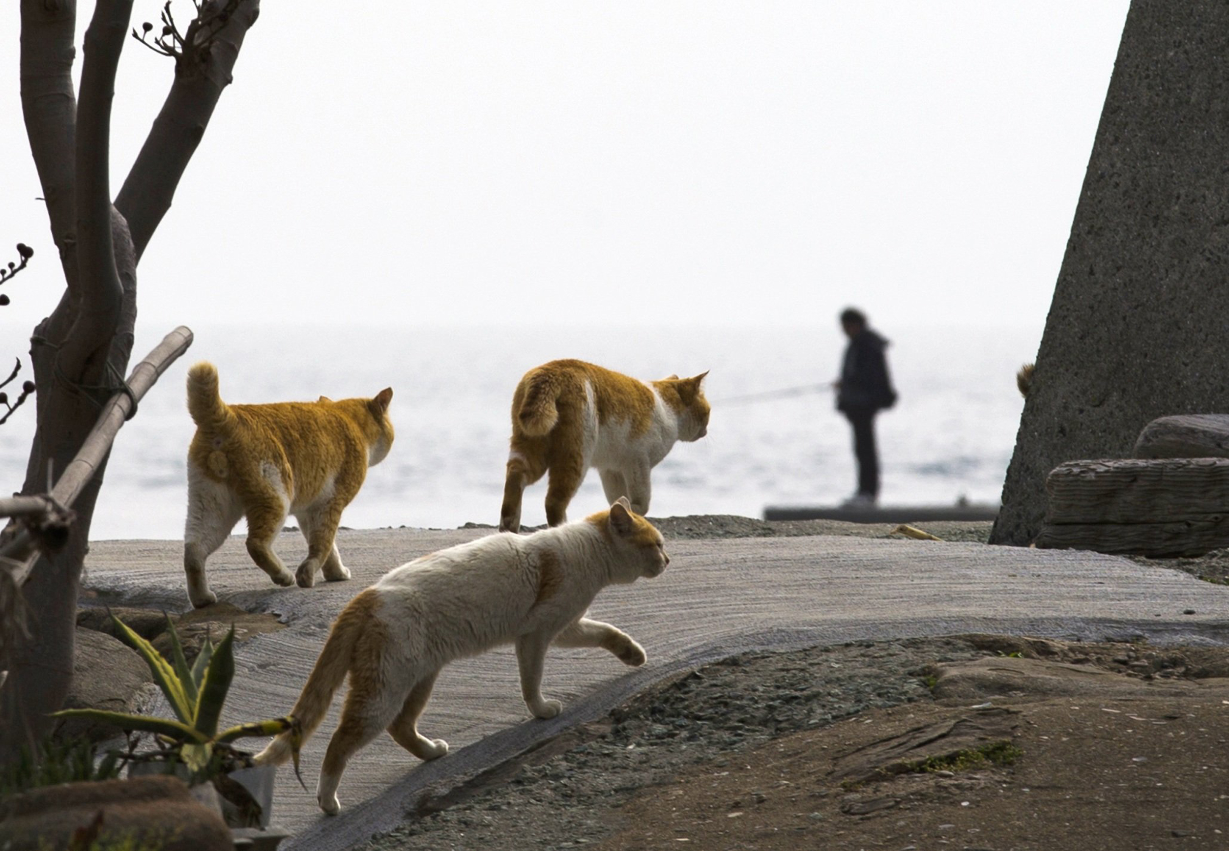Image: Cats walk along the embankment as a man fishes on Aoshima Island in Ehime prefecture in southern Japan