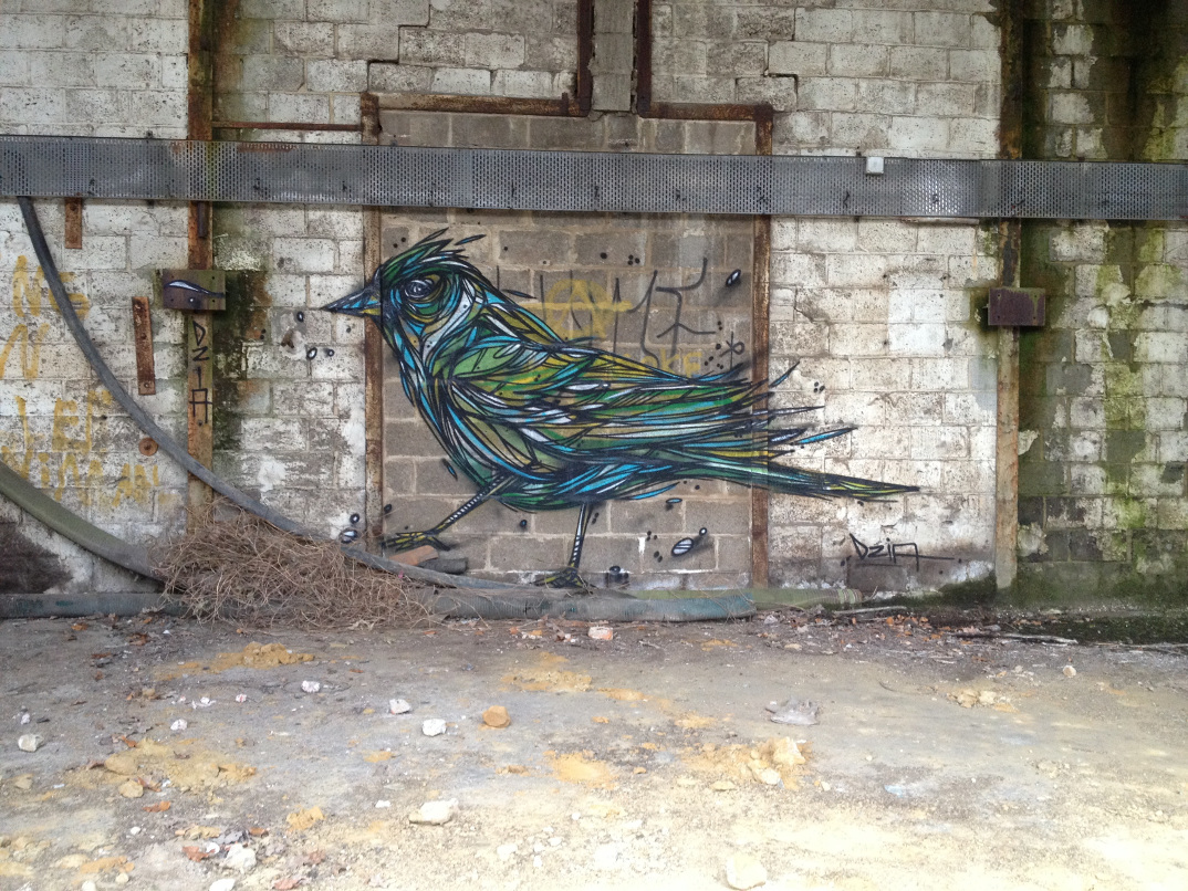 street-art-animali-dzia-15