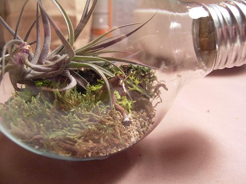 DIY terárium v žárovce