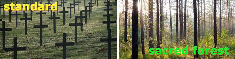 Stromy místo hřbitovu