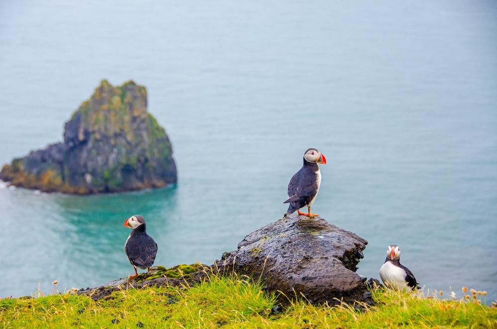Faerské ostrovy: Pohádkové místo, o kterém jste zřejmě neslyšeli