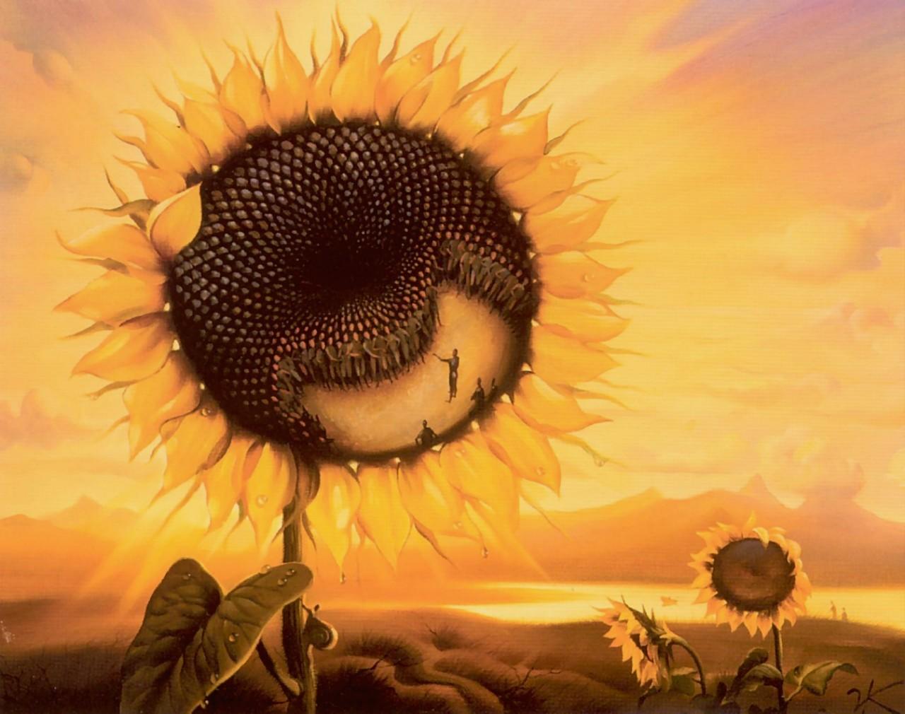 Planeta slunečnice