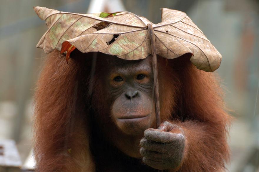 """opice s """"deštníkem"""""""