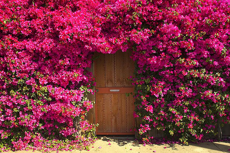 Unknown Garden Door
