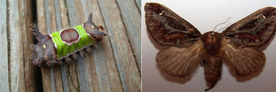 Metamorfóza: Fascinující fotografie motýlů PŘED a PO proměně