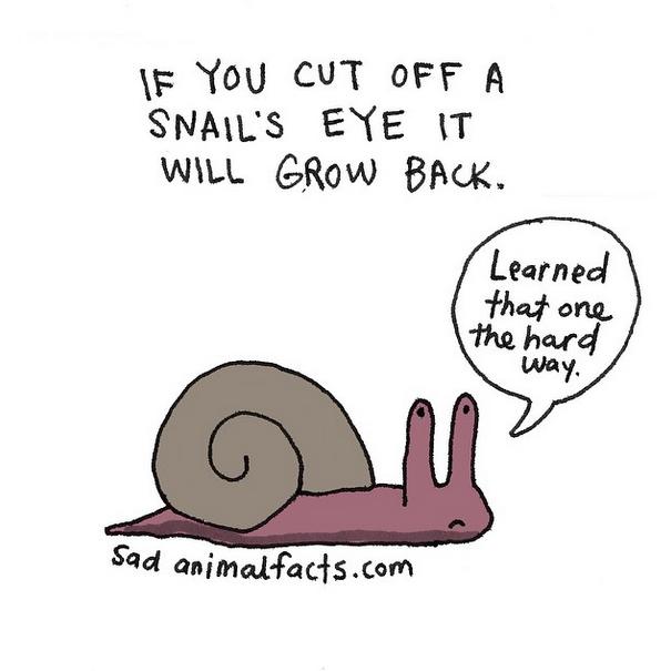 Smutná fakta o zvířatech v humorných ilustracích