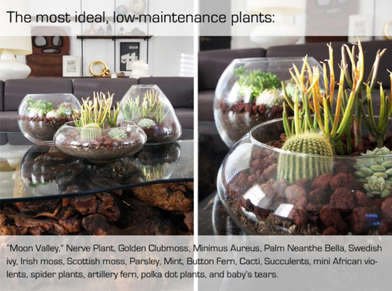 AD-Adorable-Miniature-Terrarium-Ideas-For-You-To-Try-TheBasics-1