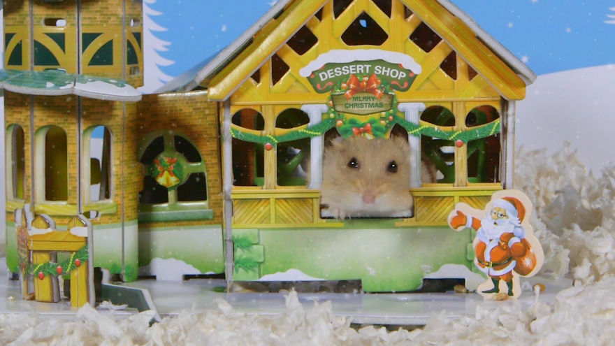 Cute-Hamsters-12-Days-of-Christmas-Pics-and-Videos10__880