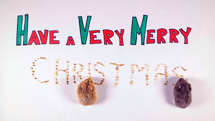 Cute-Hamsters-12-Days-of-Christmas-Pics-and-Videos12__880