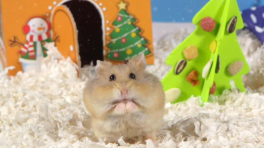 Cute-Hamsters-12-Days-of-Christmas-Pics-and-Videos2__880