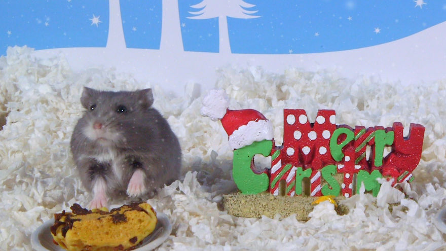 Cute-Hamsters-12-Days-of-Christmas-Pics-and-Videos3__880