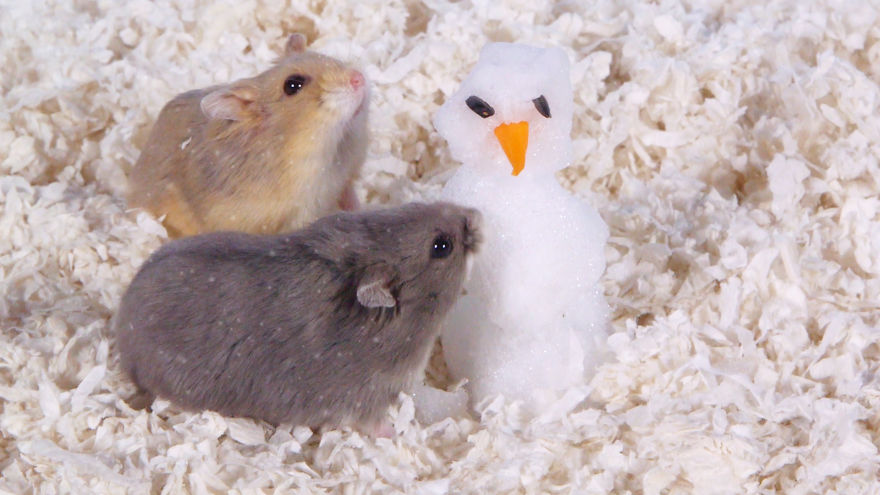 Cute-Hamsters-12-Days-of-Christmas-Pics-and-Videos9__880