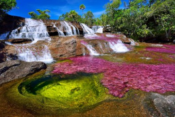 cano-cristales-river-in-colombia-at-the-conclusion-of-wet-season-1600x1068